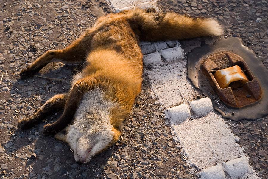 julian konczak road kill roadkill photography