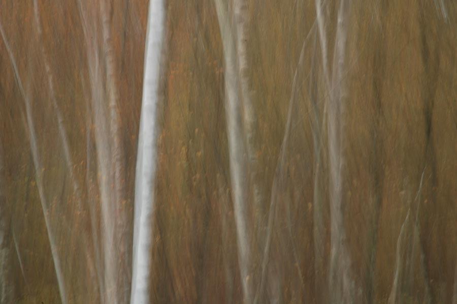 new forest blur julian konczak